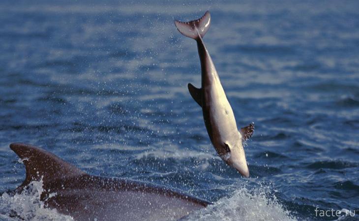 Жестокость дельфинов