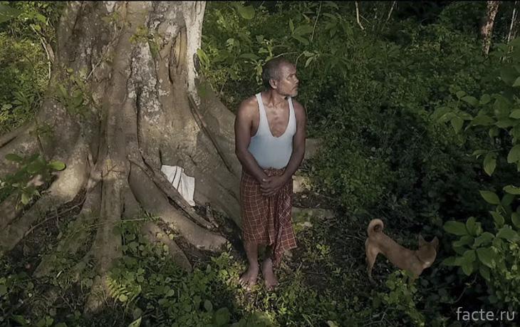Лес, посаженный Джадаву Пайенгу