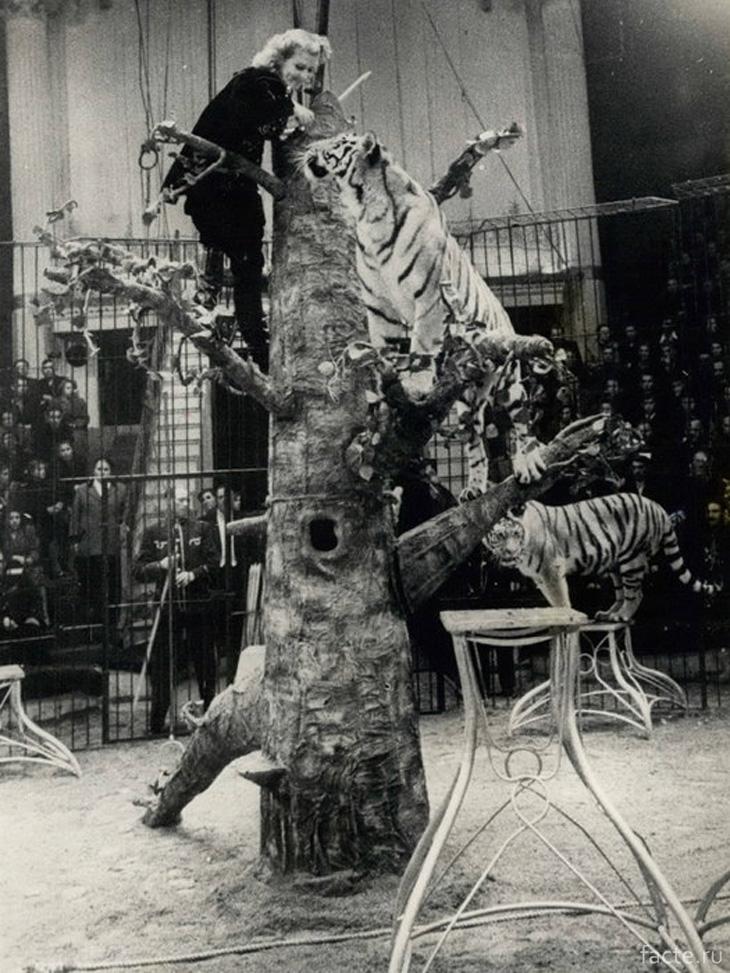 Королева тигров
