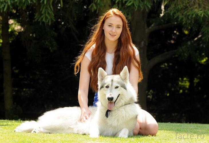 Софи и собака