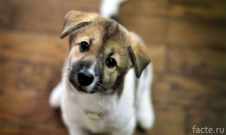 Эмоциональная собака