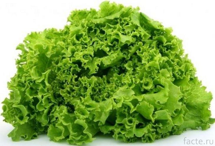 Салат-латук
