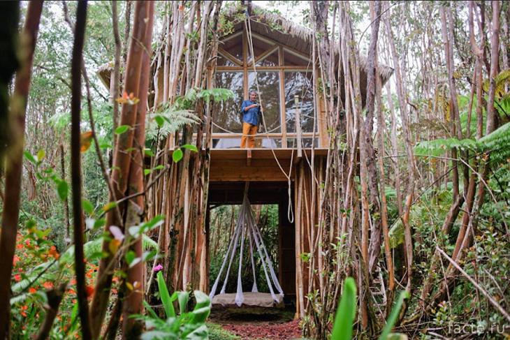 Гавайи. Домик на сваях в тропическом лесу