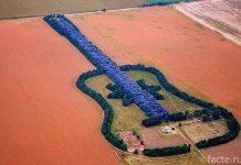 Лес в форме гитары