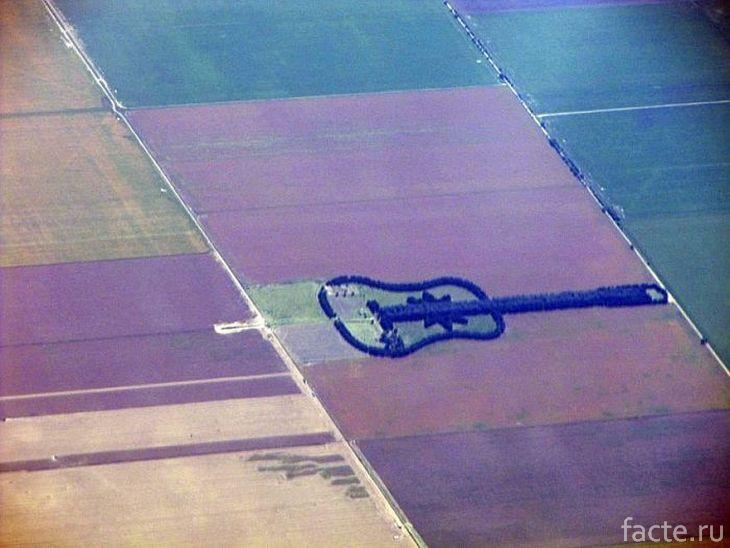 Лес в форме гитары, вид с воздуха