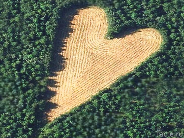 Лес в форме сердца
