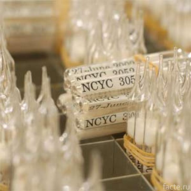 Дрожжи NCYC