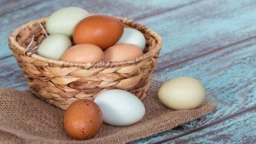 Белые и коричневые яйца