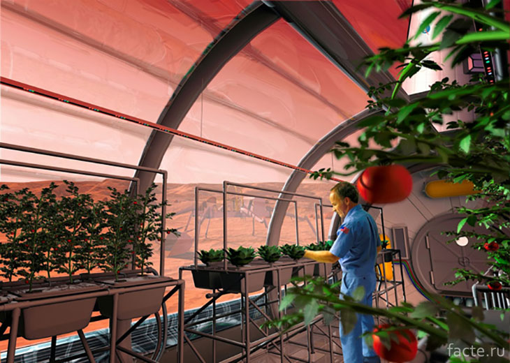 Выращивание овощей в космосе