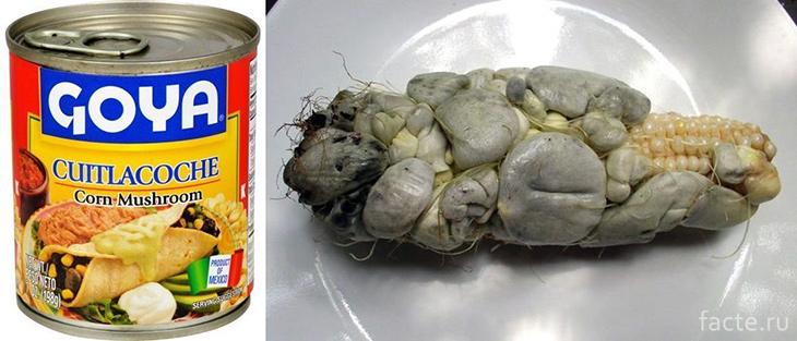 Консервированный кукурузный грибок