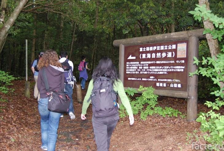 Туристы в лесу мертвых