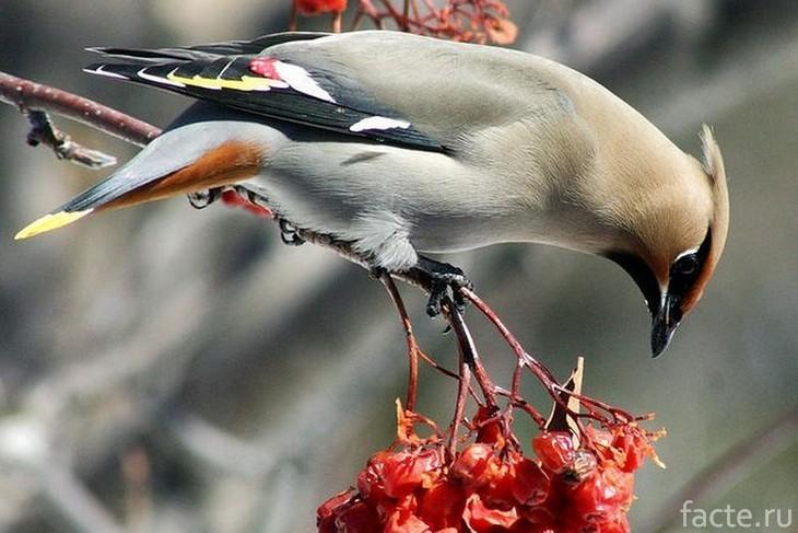Пьяная птица