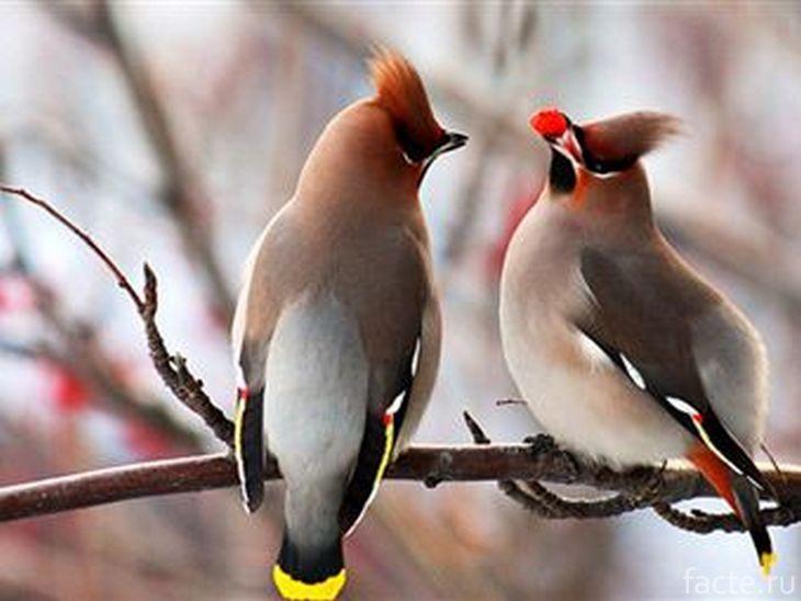 Пьяные птицы
