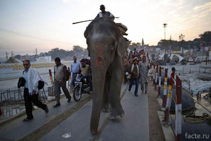 На слоне по понтоному мосту