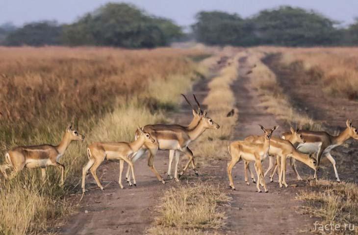 Парк дикой флоры и фауны «Чандрапрабха»