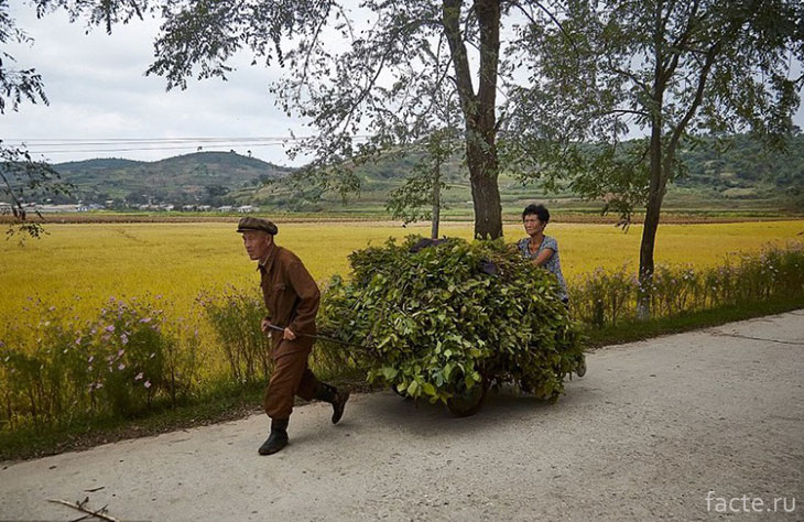 Сельская работа