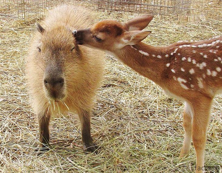 Чизкейк и олененок