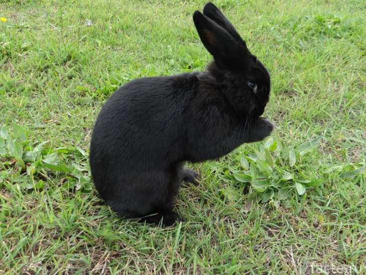 кролик 3