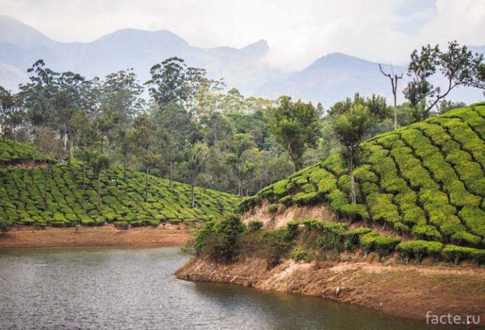 Озера на чайной плантации