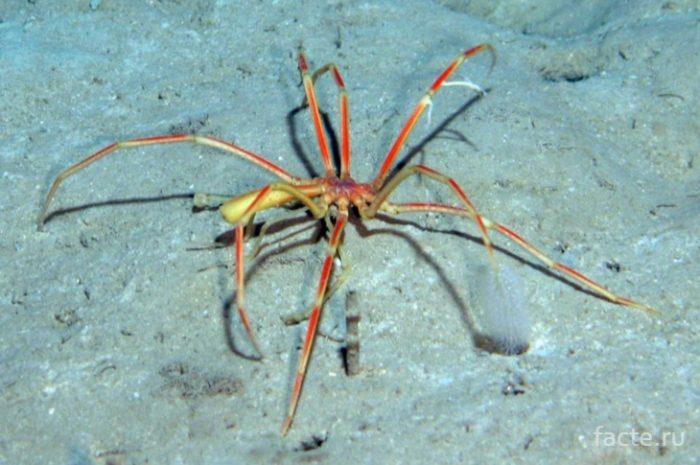 паук в море