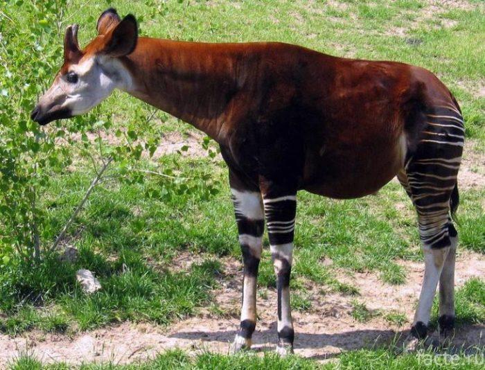 жираф 3