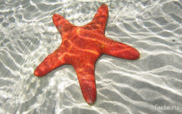 звезда в воде