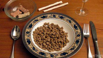 Собачья еда