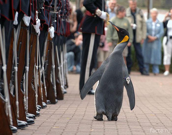 Главнокомандующий гвардии норвежского короля