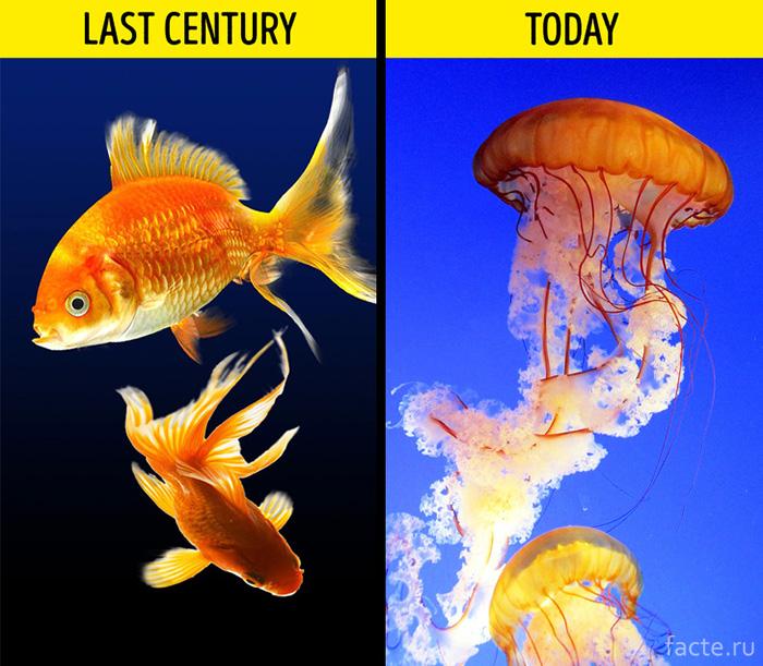 Рыбы и медузы