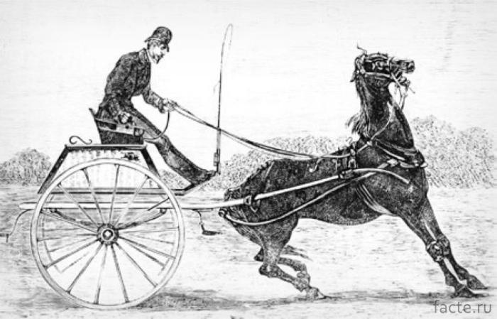 Электрошокеры для лошадей