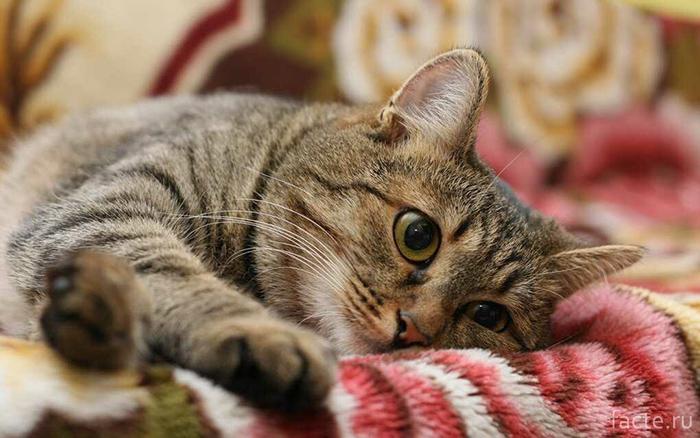 Кошка игнорирует