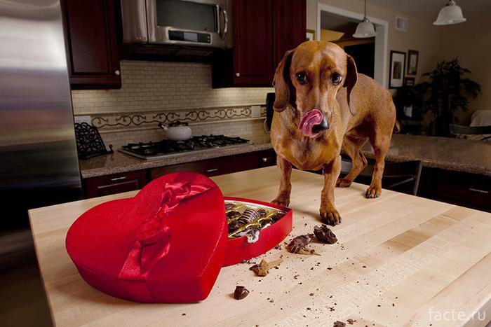 Вредные для собаки продукты