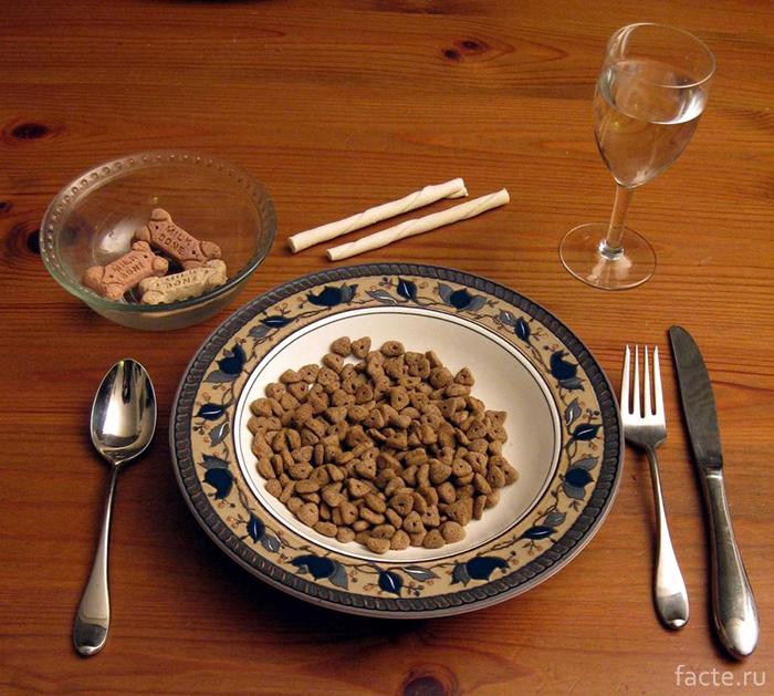 Дегустатор собачьей еды