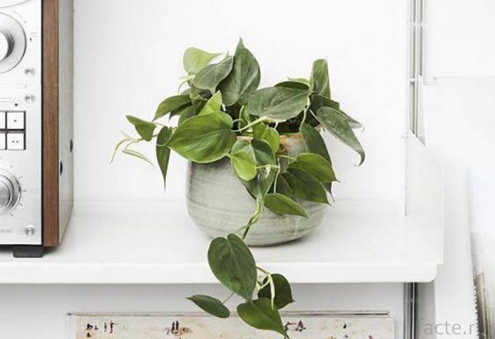 Растения 3