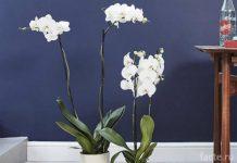 Растения 4