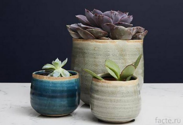 Растения 5