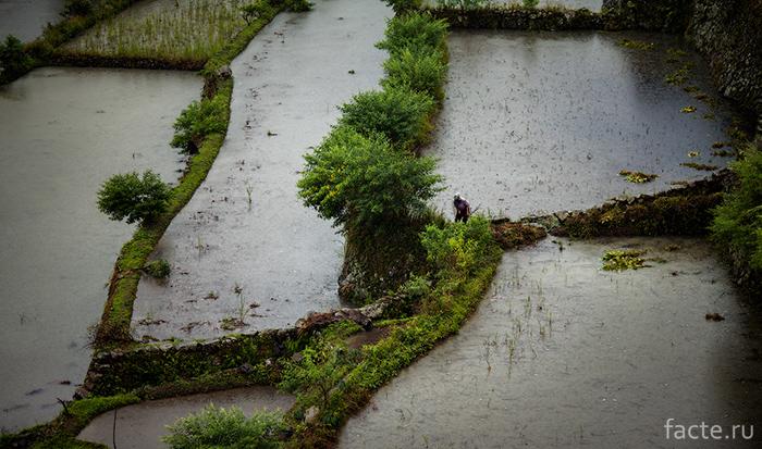 Участки для рассады риса