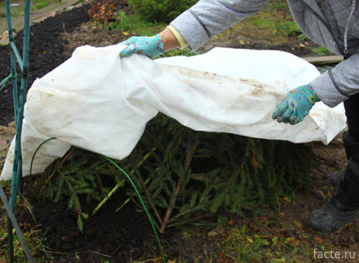 Укрытия растений