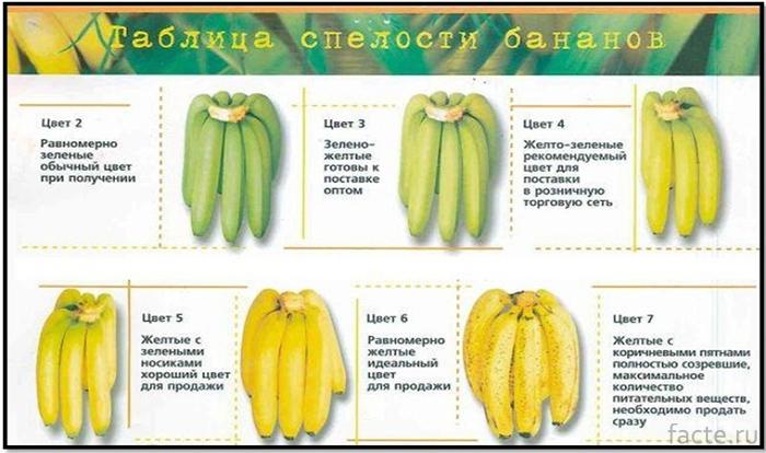 Степени созревания бананов