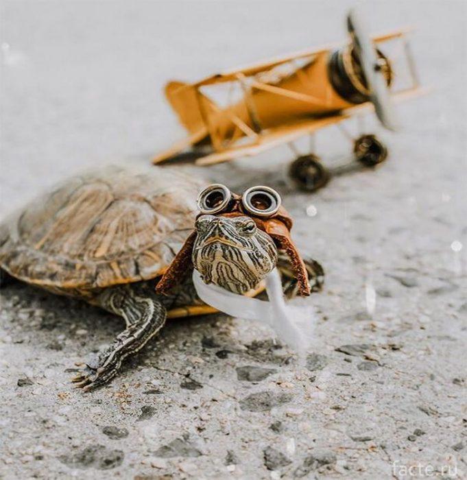 Черепахи 1