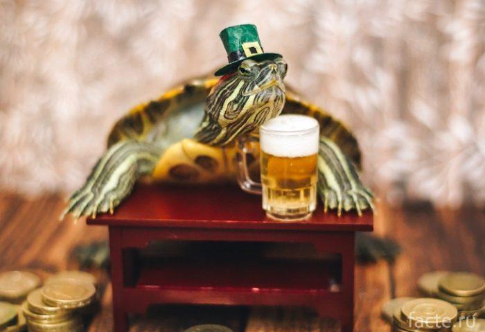 Черепахи 5