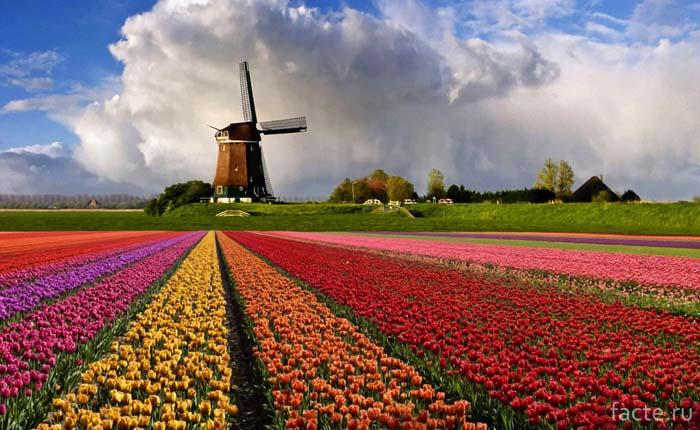 Голландский