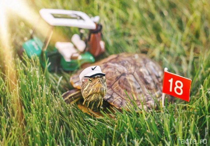Черепахи 7