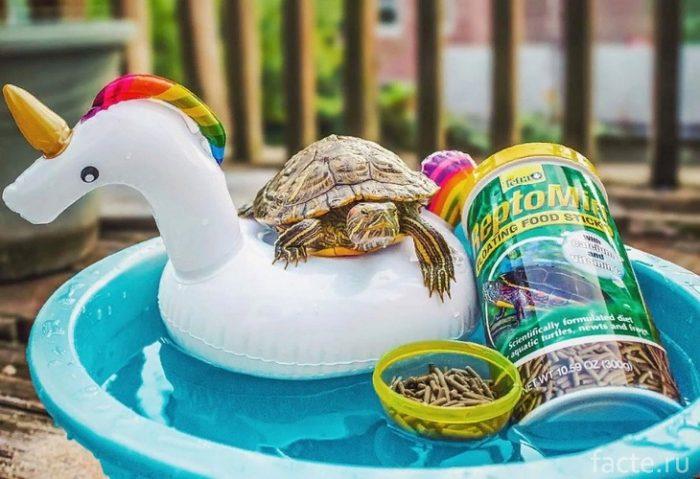 Черепахи 6