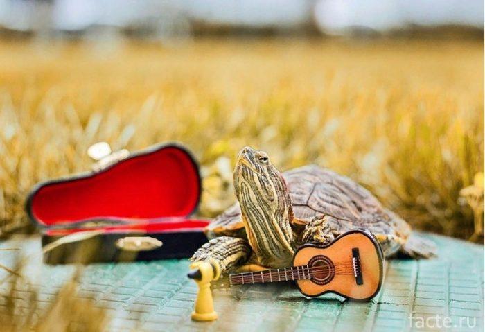 Черепахи 8