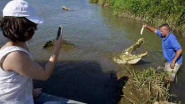 Крокодилы 4