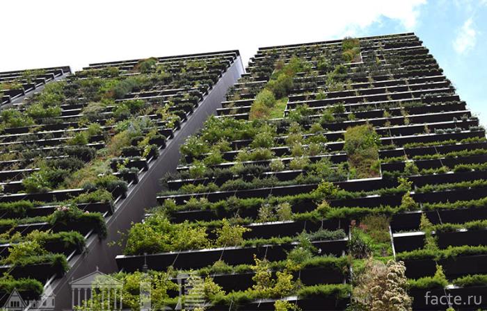 Вид-озеленения-живая-стена