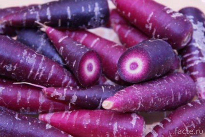 пурпурная морковь