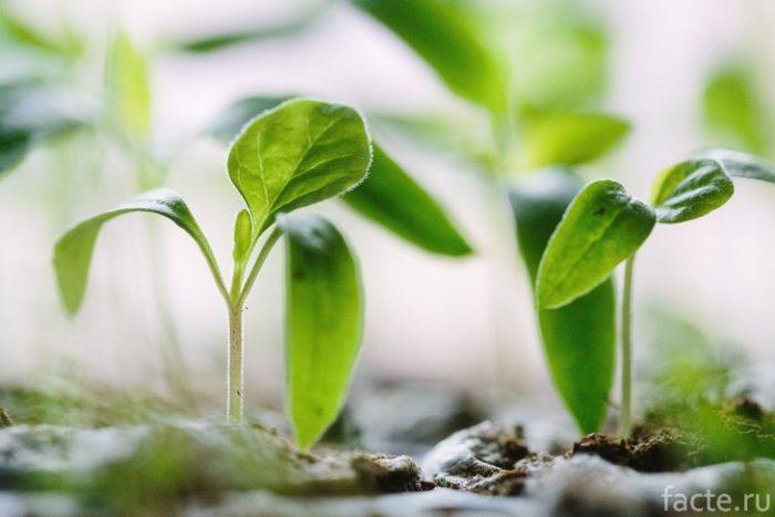 почва растений