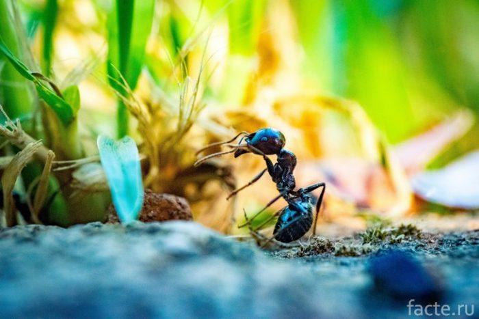 муравей макросъемка